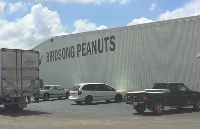 Birdsong peanut plant